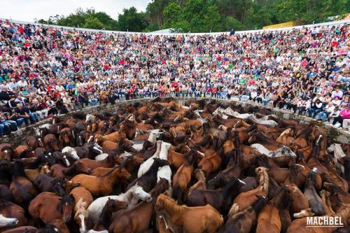 Rapa das Bestas 2012, Sabucedo, Galicia, España